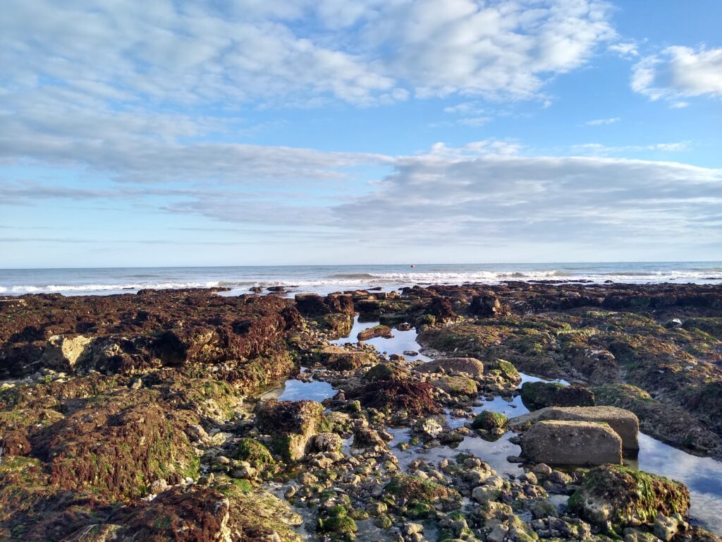 A guide to rockpooling in Brighton